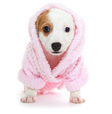 dog-grooming-miami-pet-grooming-1.jpg