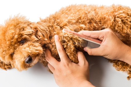 42280721 - close up of dog fur combing and detangling during grooming